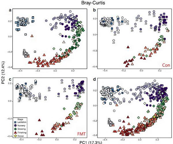 生命科学与工程学院李英研究员在《Gut Microbes》发表最新研究成果